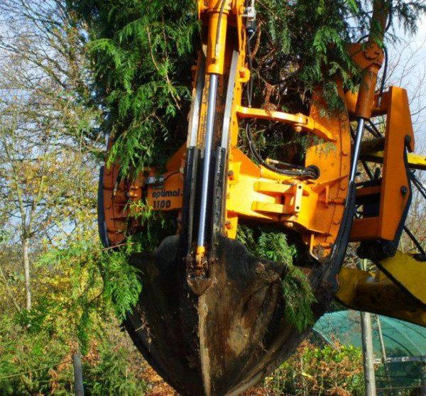 Major Tips for Choosing a Tree Moving Company